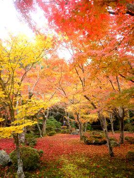 kyoto11].jpg